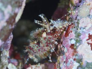 ダイビングプロショップブルーサブの四国柏島ダイビングツアー